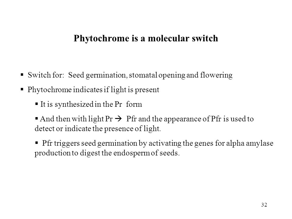 32 Phytochrome is a molecular switch  Switch for: Seed germination, stomatal opening and flowering  Phytochrome indicates if light is present  It is synthesized in the Pr form  And then with light Pr  Pfr and the appearance of Pfr is used to detect or indicate the presence of light.