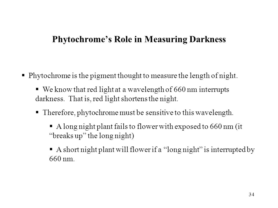 34 Phytochrome's Role in Measuring Darkness  Phytochrome is the pigment thought to measure the length of night.