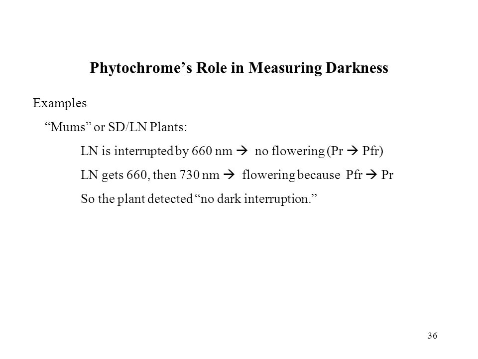 """36 Phytochrome's Role in Measuring Darkness Examples """"Mums"""" or SD/LN Plants: LN is interrupted by 660 nm  no flowering (Pr  Pfr) LN gets 660, then 7"""