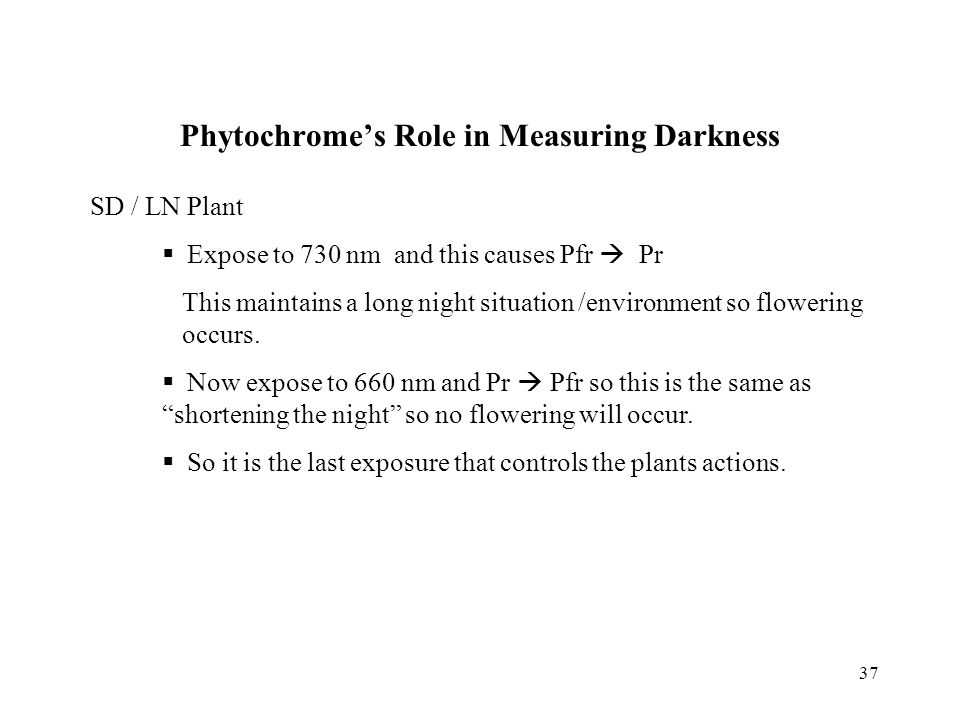 37 Phytochrome's Role in Measuring Darkness SD / LN Plant  Expose to 730 nm and this causes Pfr  Pr This maintains a long night situation /environme