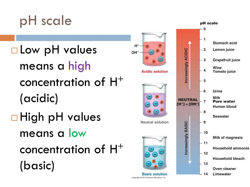 pH scale  Low pH values means a high concentration of H + (acidic)  High pH values means a low concentration of H + (basic)