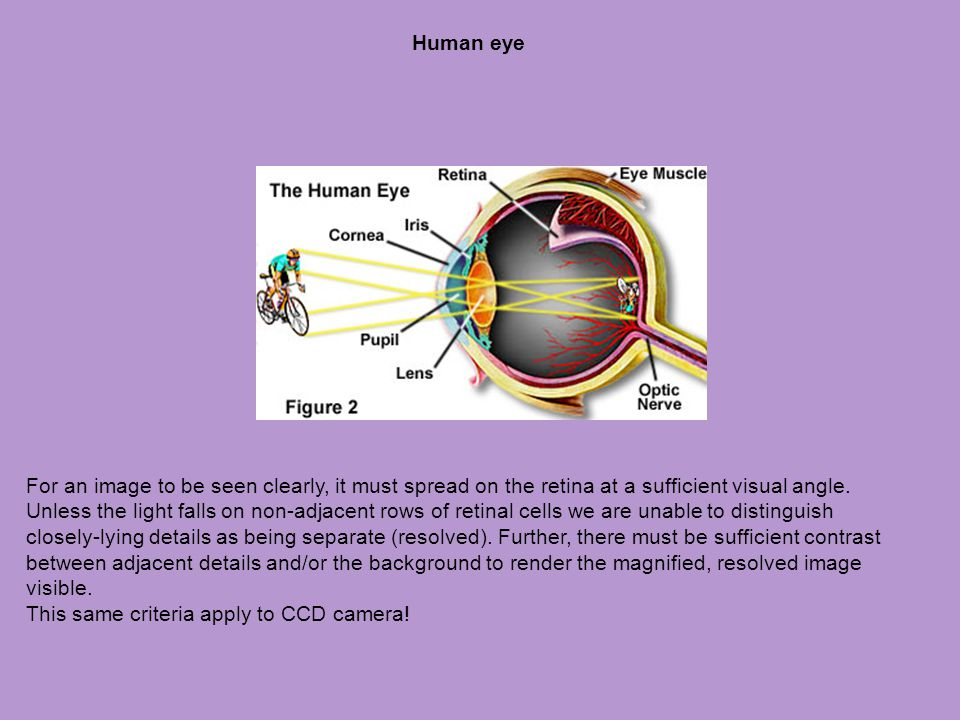 Human eye For an image to be seen clearly, it must spread on the retina at a sufficient visual angle. Unless the light falls on non-adjacent rows of r