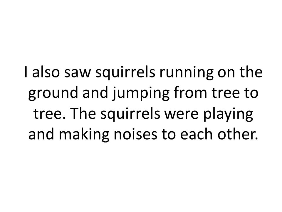 I also saw squirrels running on the ground and jumping from tree to tree.
