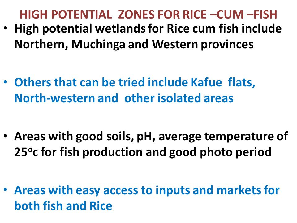 HIGH POTENTIAL ZONES FOR RICE –CUM –FISH High potential wetlands for Rice cum fish include Northern, Muchinga and Western provinces Others that can be