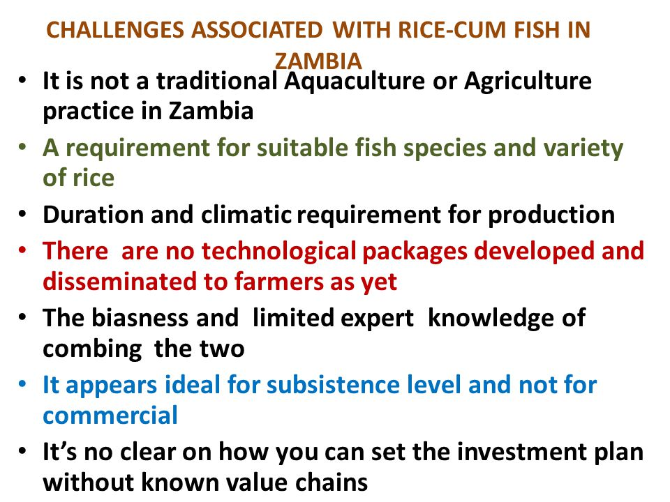 CHALLENGES ASSOCIATED WITH RICE-CUM FISH IN ZAMBIA It is not a traditional Aquaculture or Agriculture practice in Zambia A requirement for suitable fi