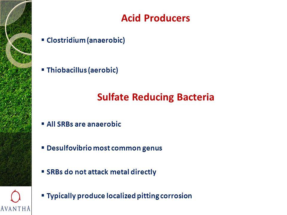 Acid Producers  Clostridium (anaerobic)  Thiobacillus (aerobic) Sulfate Reducing Bacteria  All SRBs are anaerobic  Desulfovibrio most common genus