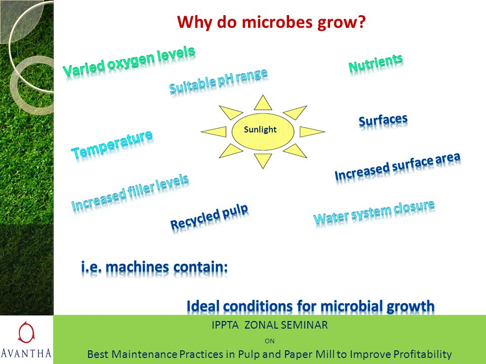 Why do microbes grow? Sunlight IPPTA ZONAL SEMINAR ON Best Maintenance Practices in Pulp and Paper Mill to Improve Profitability