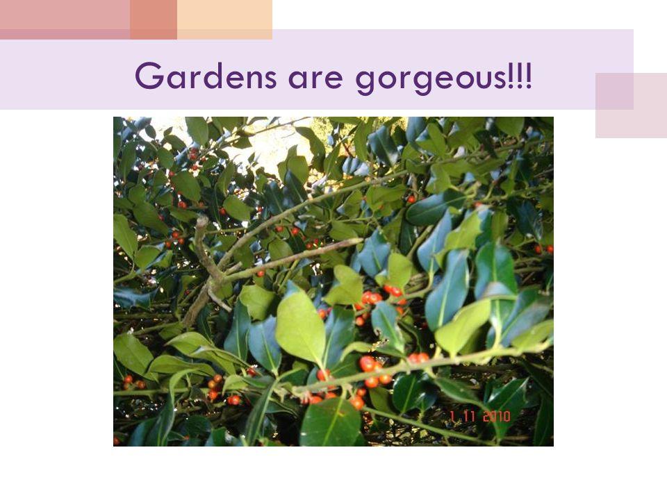 Gardens are gorgeous!!!