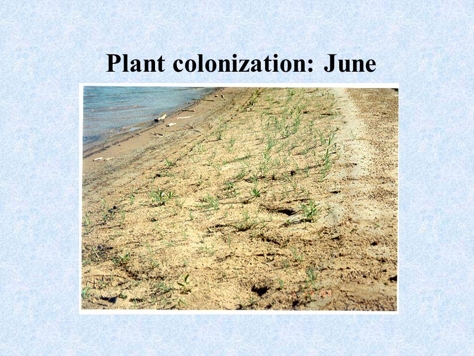 Plant colonization: June