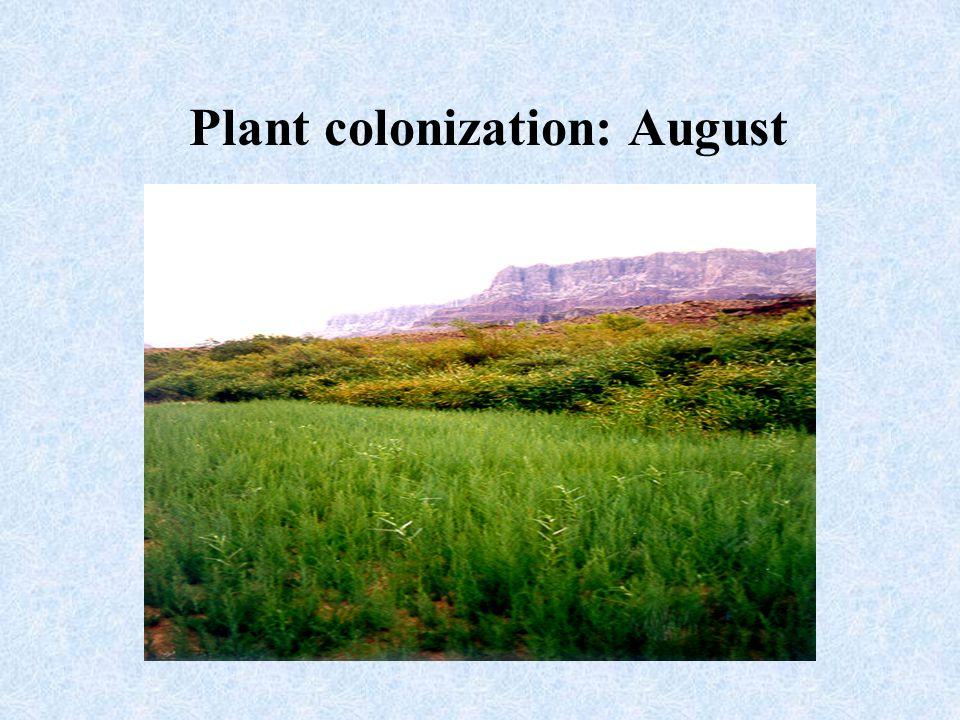 Plant colonization: August