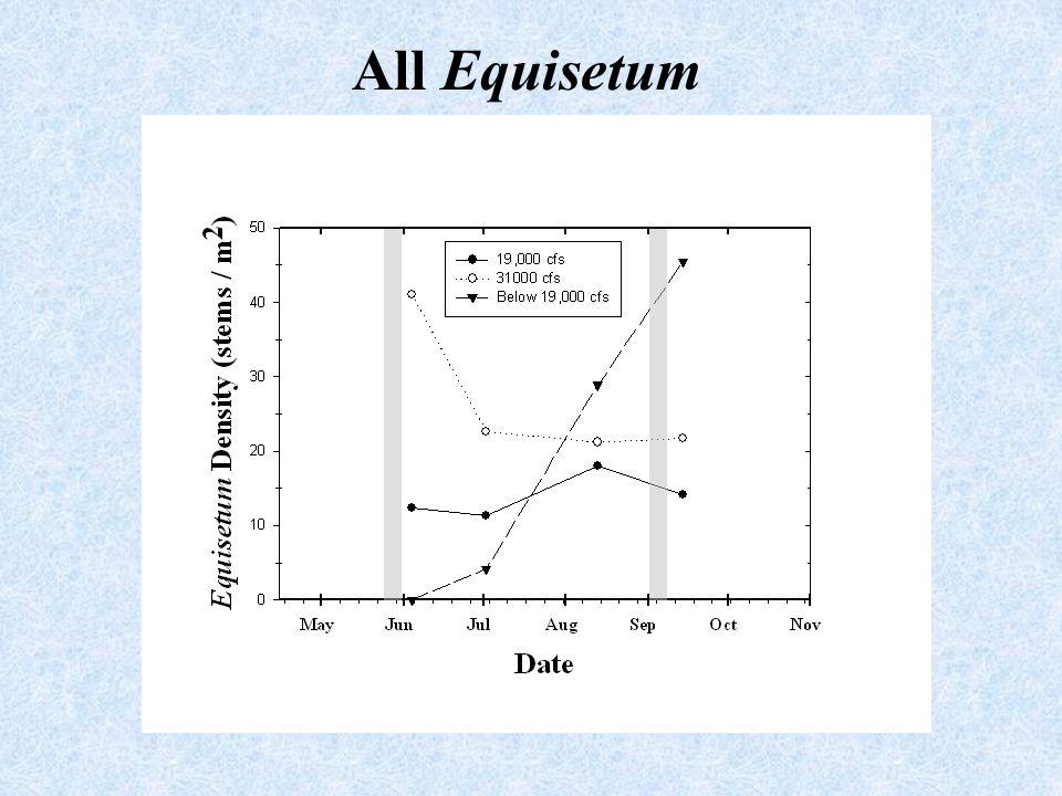 All Equisetum