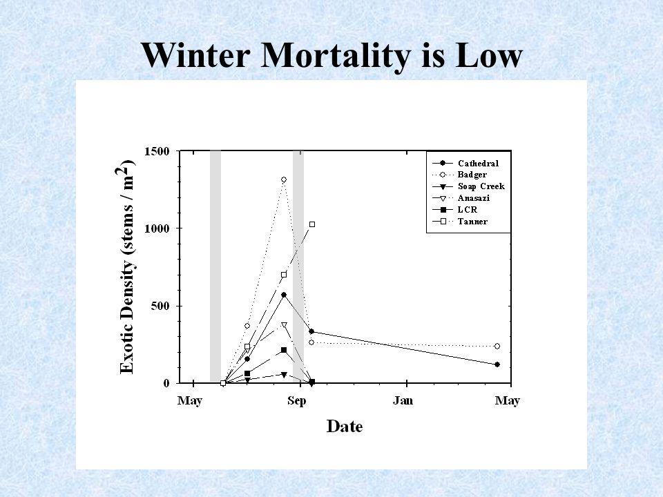 Winter Mortality is Low