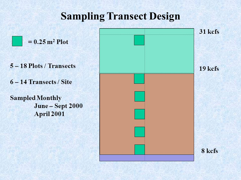 Sampling Transect Design 31 kcfs 19 kcfs 8 kcfs = 0.25 m 2 Plot 5 – 18 Plots / Transects 6 – 14 Transects / Site Sampled Monthly June – Sept 2000 April 2001