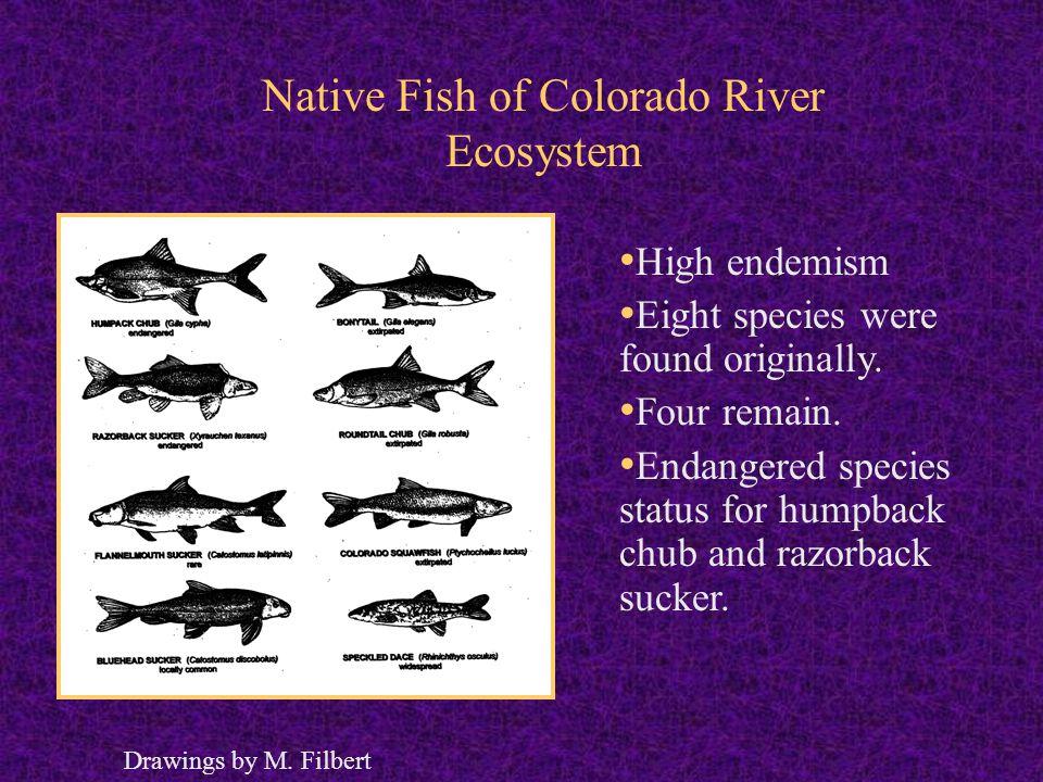 Environmental Regulation on the Colorado River Ecosystem Ecological regulation (Endangered 1967, ESA 1978, Biological opinion 1994).