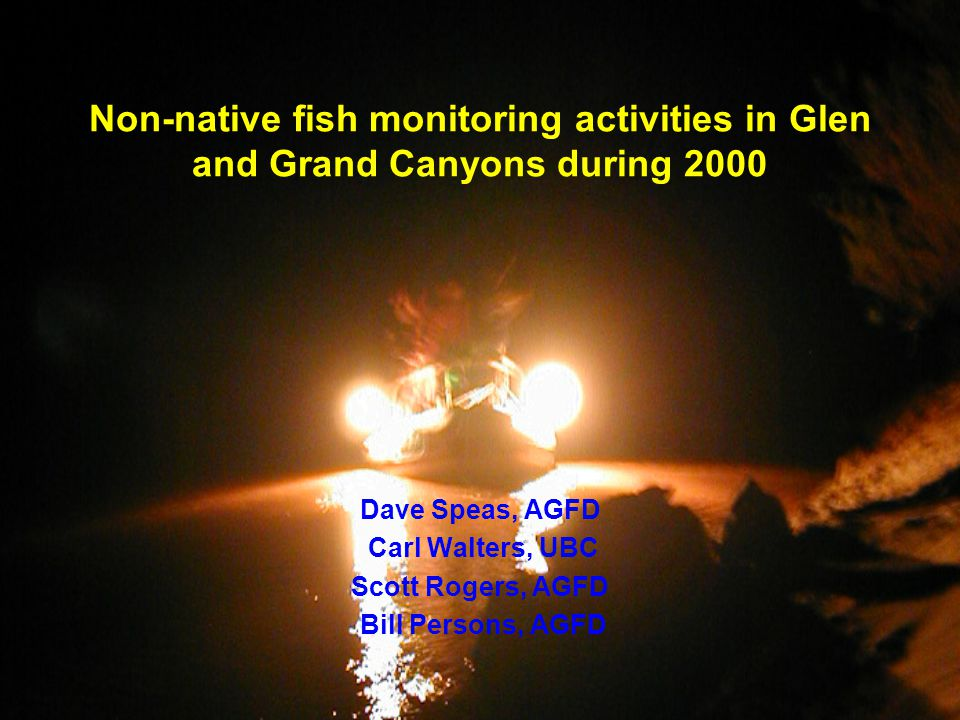Non-native fish monitoring activities in Glen and Grand Canyons during 2000 Dave Speas, AGFD Carl Walters, UBC Scott Rogers, AGFD Bill Persons, AGFD