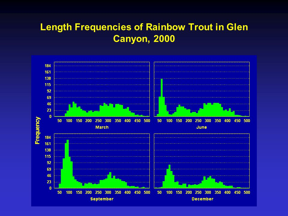 Length Frequencies of Rainbow Trout in Glen Canyon, 2000