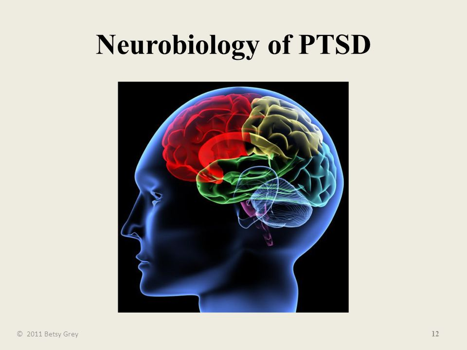 Neurobiology of PTSD 12 © 2011 Betsy Grey