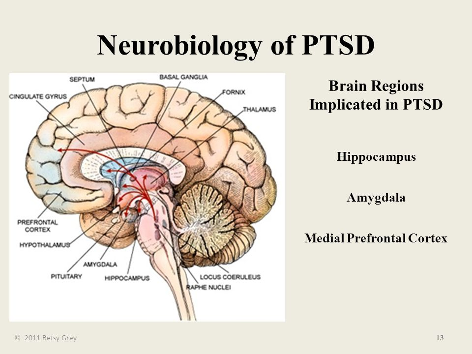 13 Neurobiology of PTSD Brain Regions Implicated in PTSD Hippocampus Amygdala Medial Prefrontal Cortex © 2011 Betsy Grey