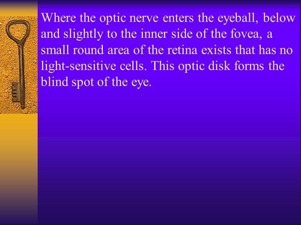 Where the optic nerve enters the eyeball, below and slightly to the inner side of the fovea, a small round area of the retina exists that has no light