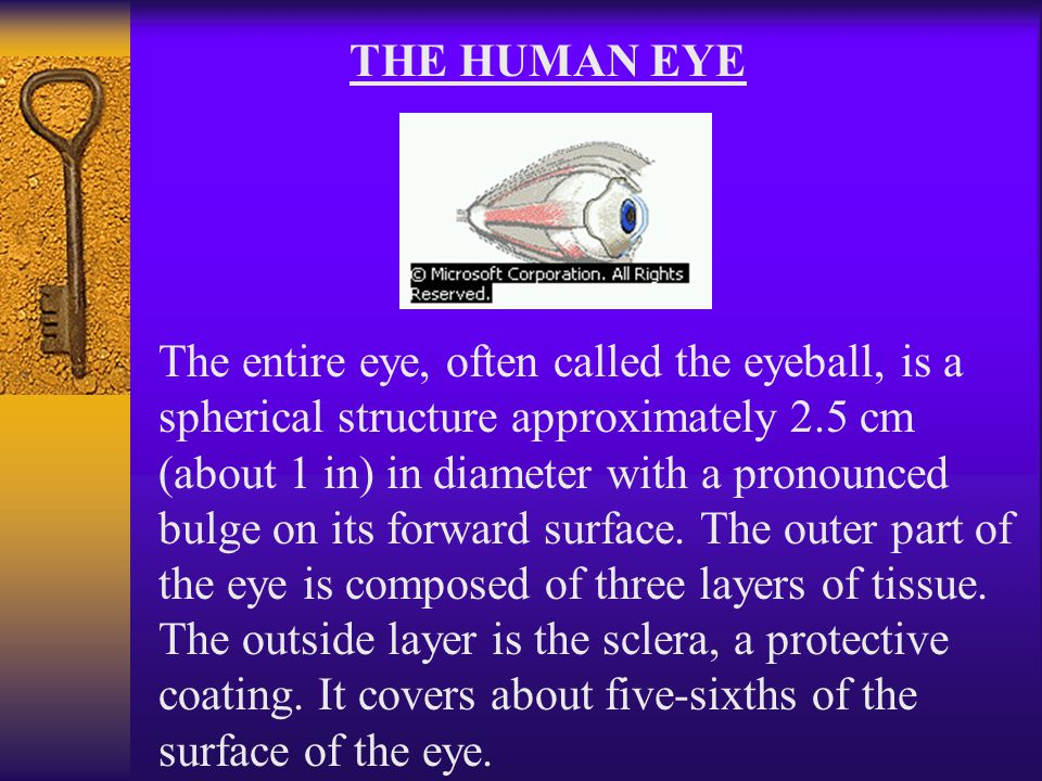 THE HUMAN EYE The entire eye, often called the eyeball, is a spherical structure approximately 2.5 cm (about 1 in) in diameter with a pronounced bulge