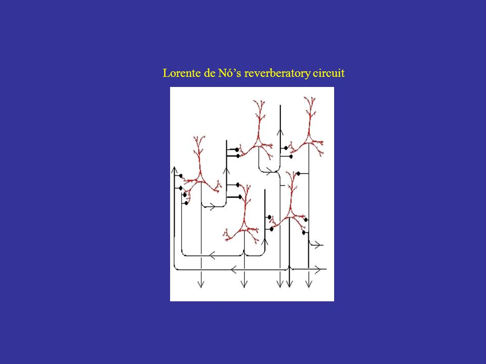 Lorente de Nó's reverberatory circuit