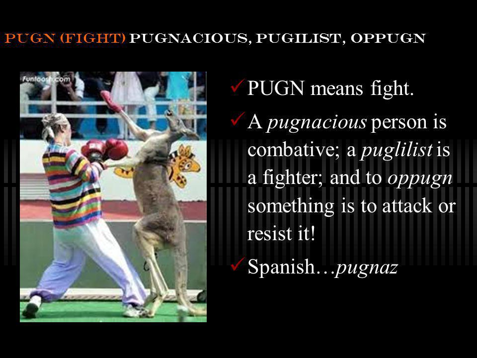 pugn (fight) pugnacious, pugilist, oppugn PUGN means fight.