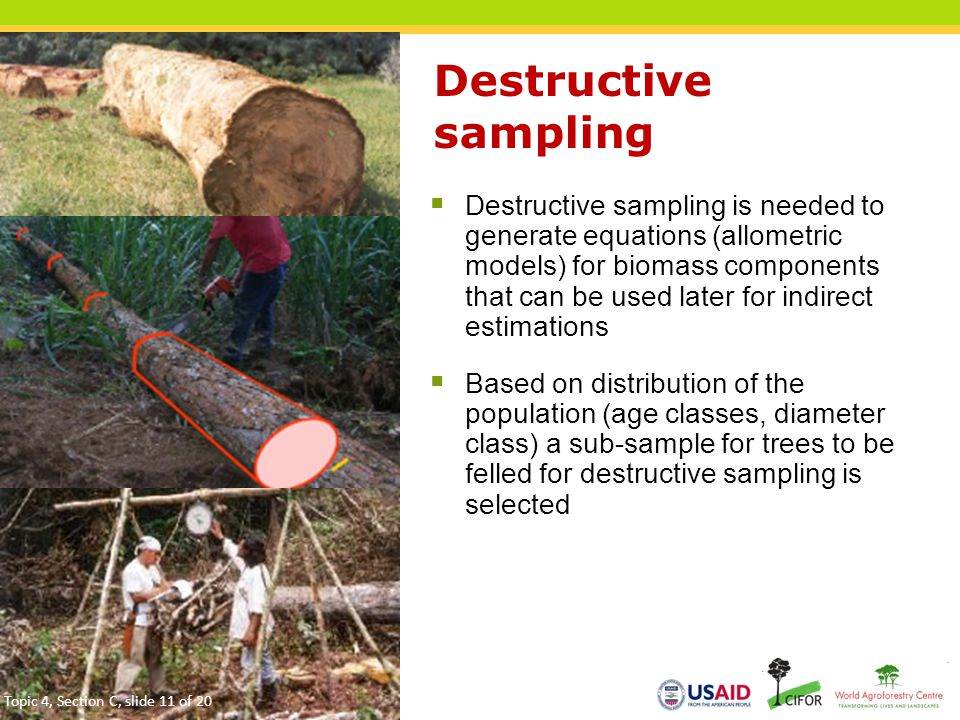 Destructive sampling  Destructive sampling is needed to generate equations (allometric models) for biomass components that can be used later for indirect estimations  Based on distribution of the population (age classes, diameter class) a sub-sample for trees to be felled for destructive sampling is selected 11 Topic 4, Section C, slide 11 of 20