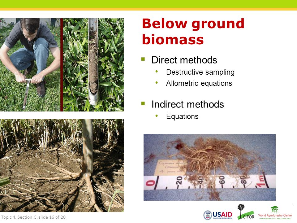 Below ground biomass  Direct methods Destructive sampling Allometric equations  Indirect methods Equations Topic 4, Section C, slide 16 of 20