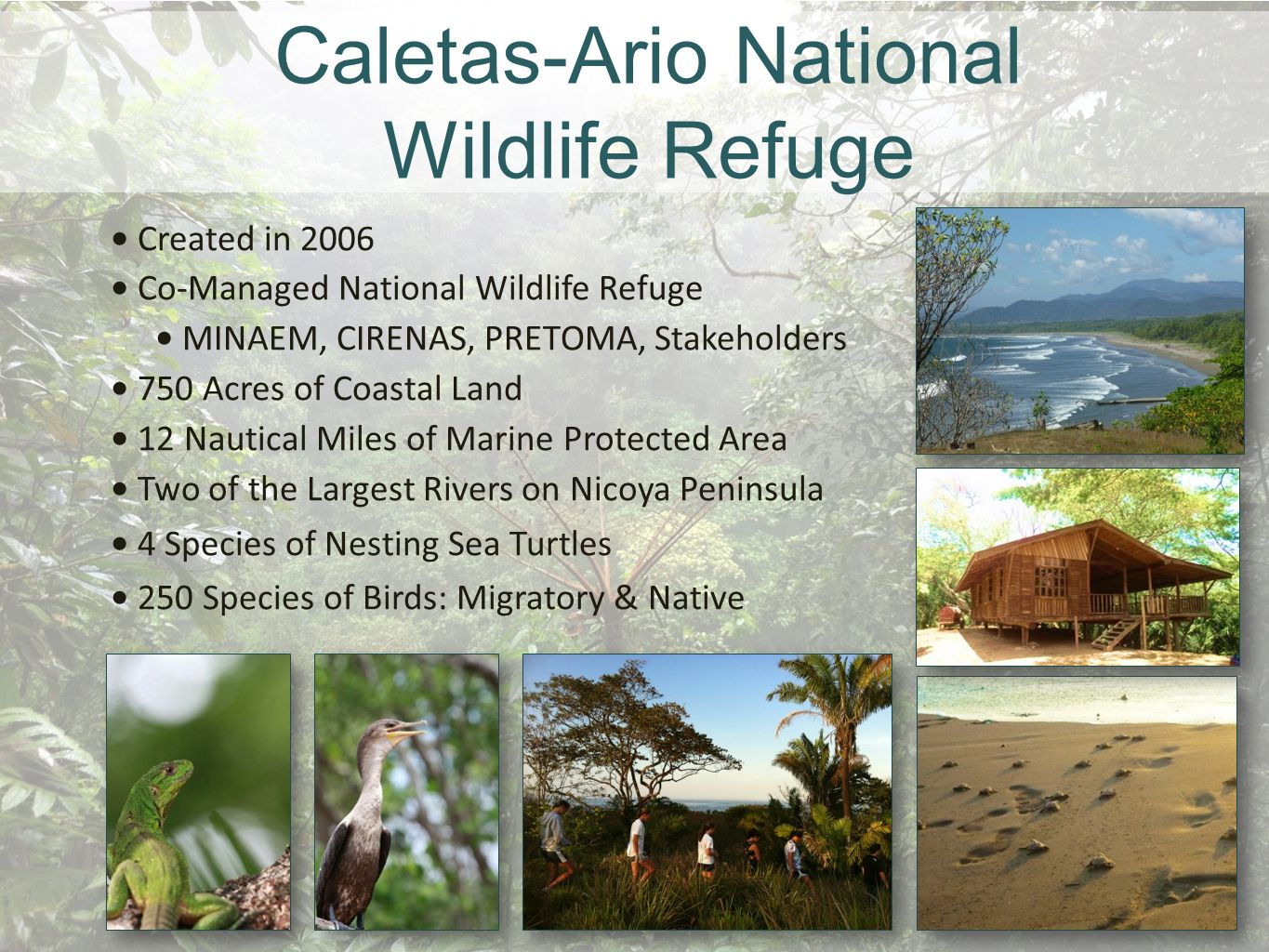 Caletas-Ario National Wildlife Refuge Created in 2006 Co-Managed National Wildlife Refuge MINAEM, CIRENAS, PRETOMA, Stakeholders 750 Acres of Coastal