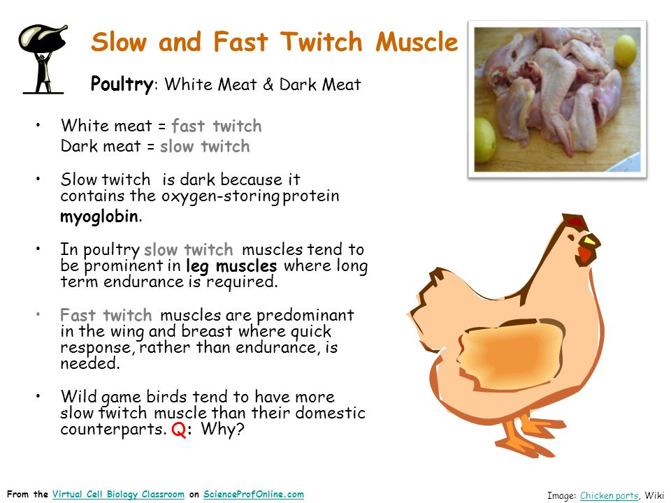 Slow and Fast Twitch Muscle Poultry : White Meat & Dark Meat White meat = fast twitch Dark meat = slow twitch Slow twitch is dark because it contains