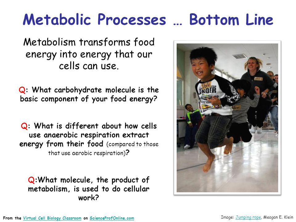Metabolic Processes … Bottom Line Metabolism transforms food energy into energy that our cells can use. Q: What carbohydrate molecule is the basic com