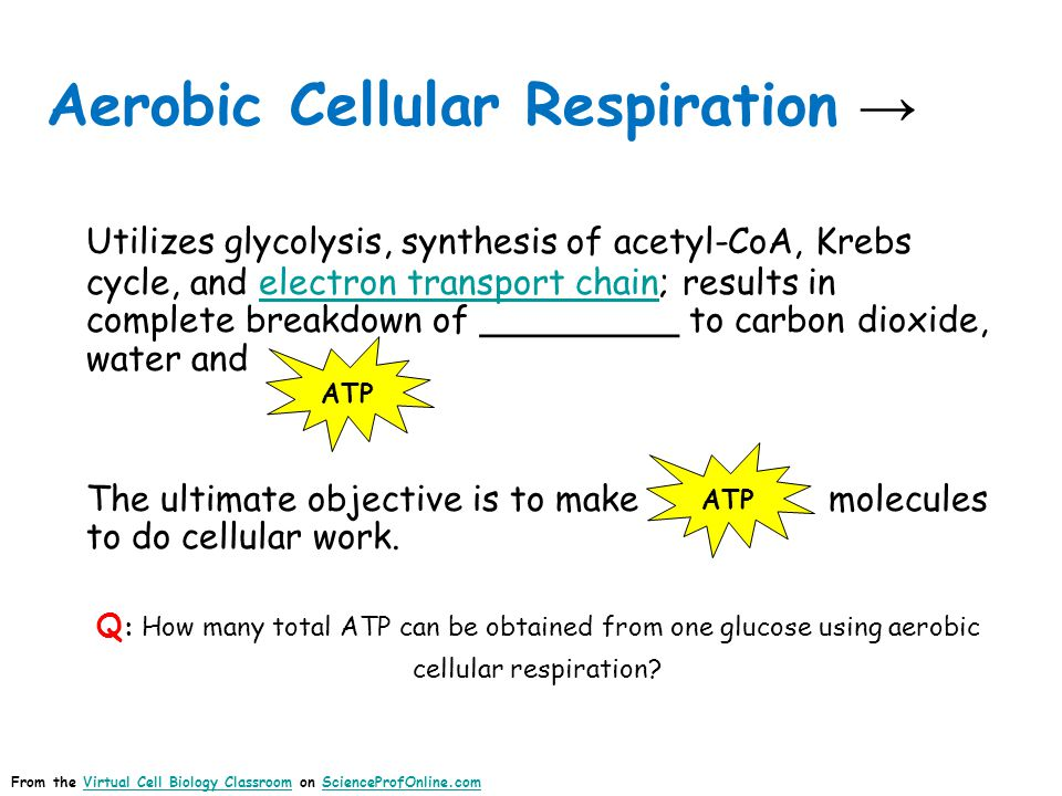 Aerobic Cellular Respiration Images: Cellular Respiration, Regis FreyCellular Respiration Q: What is the role of O 2 in aerobic cellular respiration.