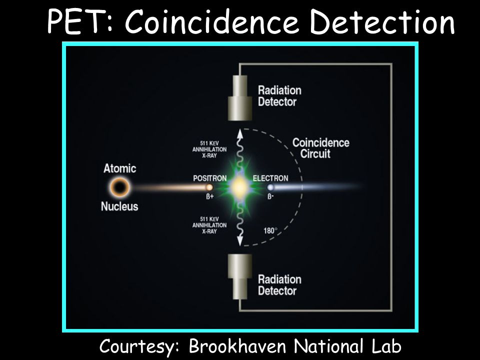 Courtesy: Brookhaven National Lab PET: Coincidence Detection