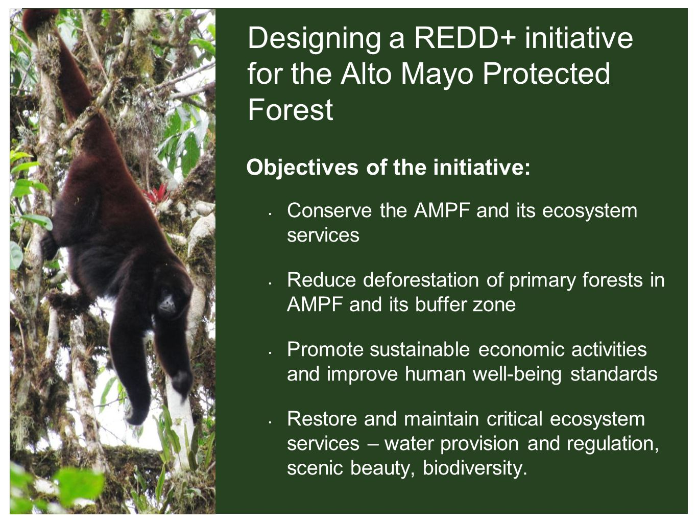 Designing a REDD+ initiative for the Alto Mayo Protected Forest Objectives of the initiative: Conserve the AMPF and its ecosystem services Reduce deforestation of primary forests in AMPF and its buffer zone Promote sustainable economic activities and improve human well-being standards Restore and maintain critical ecosystem services – water provision and regulation, scenic beauty, biodiversity.