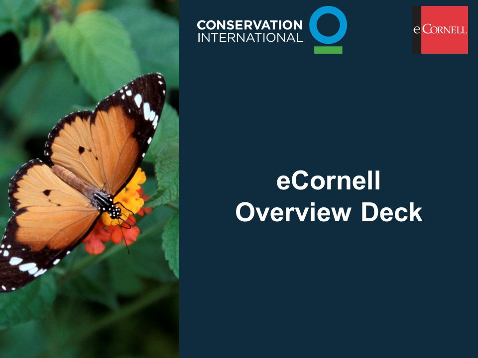 eCornell Overview Deck