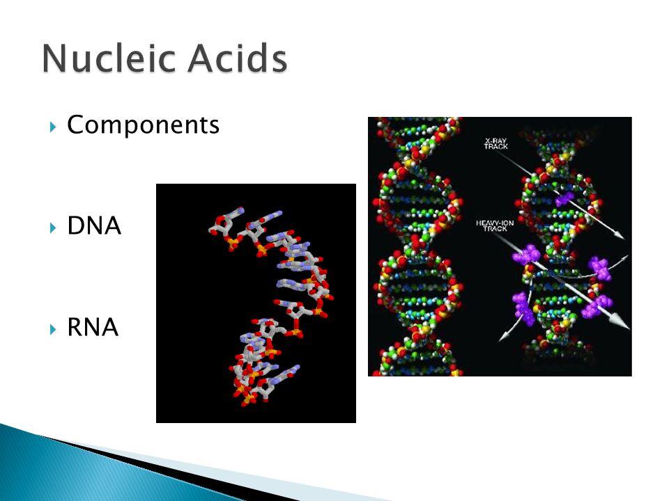  Components  DNA  RNA