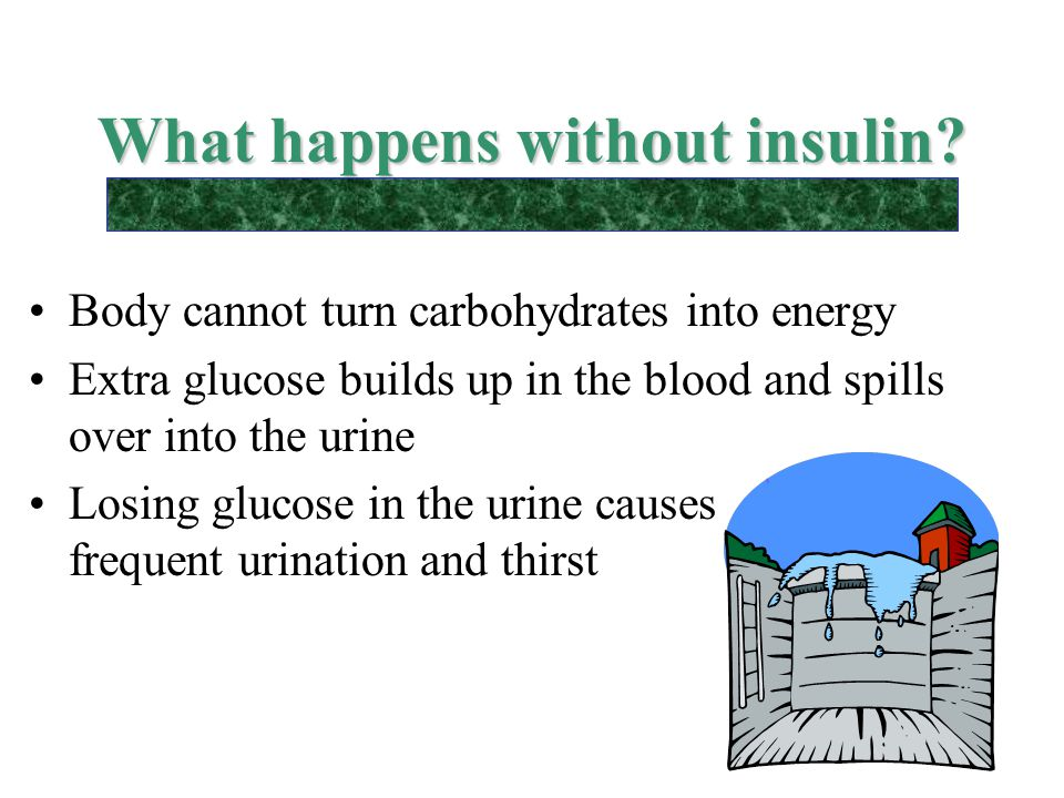 What happens without insulin? Body cannot turn carbohydrates into energy Extra glucose builds up in the blood and spills over into the urine Losing gl