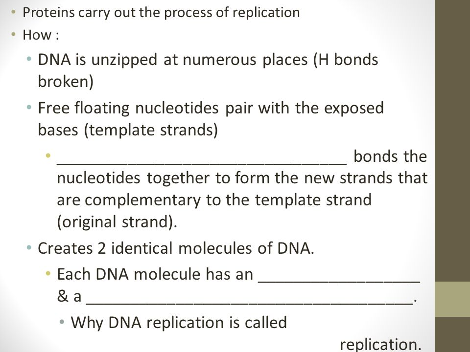 Proteins carry out the process of replication How : DNA is unzipped at numerous places (H bonds broken) Free floating nucleotides pair with the expose