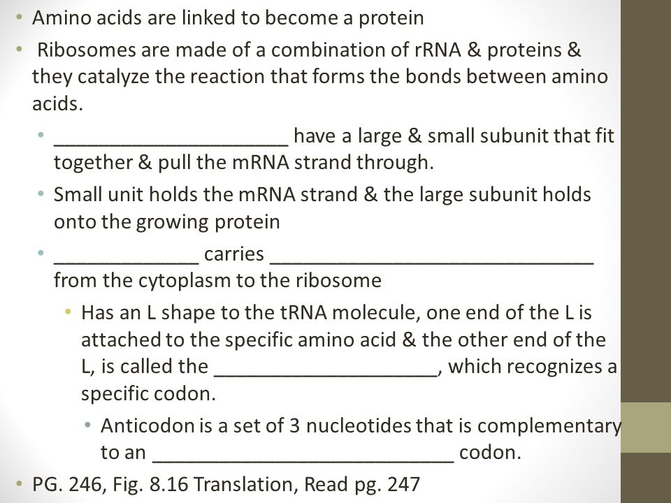Amino acids are linked to become a protein Ribosomes are made of a combination of rRNA & proteins & they catalyze the reaction that forms the bonds be