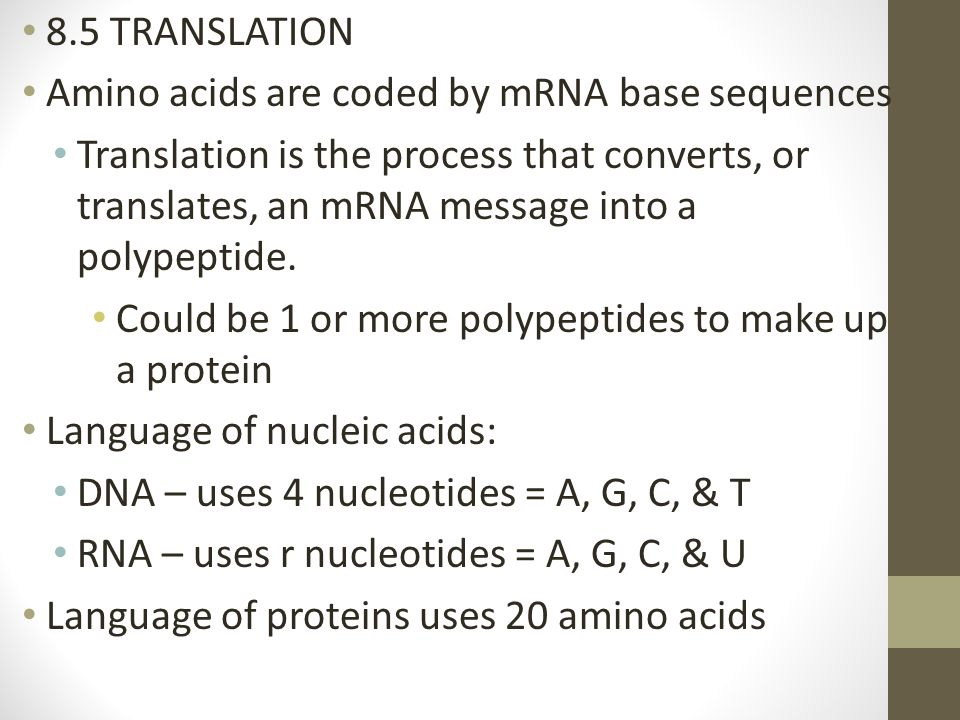 8.5 TRANSLATION Amino acids are coded by mRNA base sequences Translation is the process that converts, or translates, an mRNA message into a polypepti