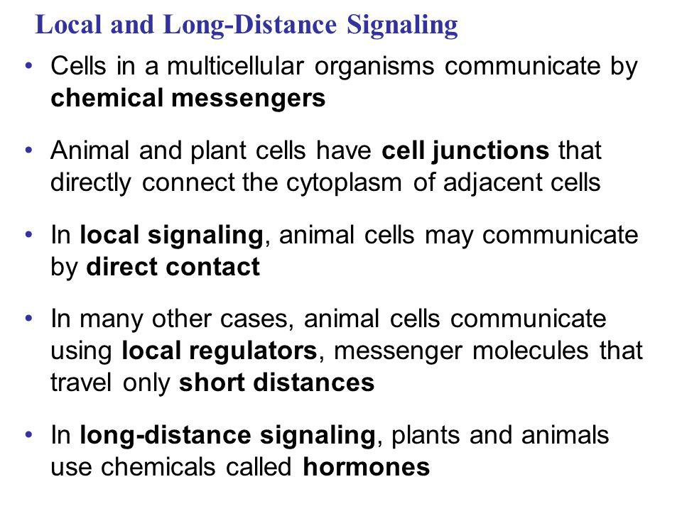 Animations and Videos Bozeman - Signal Transduction Second Messengers (cAMP and Ca+2 Pathways) Chemical Synapse – 1 Chemical Synapse – 2 Voltage-Gated Channels and the Action Potential Signal Transduction Pathway Signaling by Secreted Molecules Signal Transduction