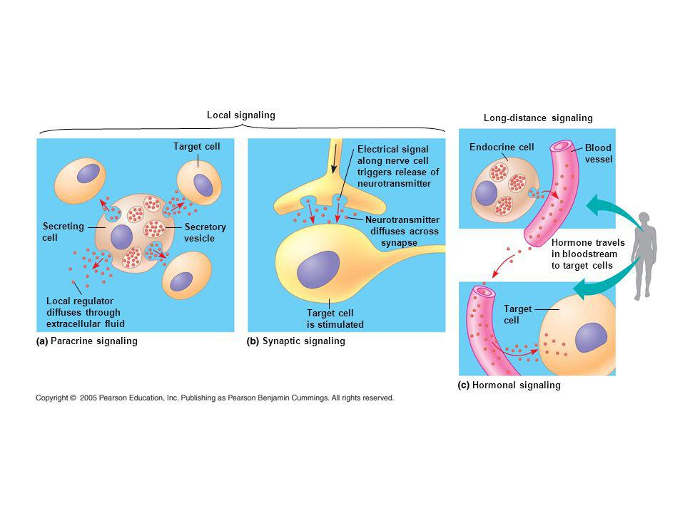 The Three Stages of Cell Signaling: A Preview Earl W.
