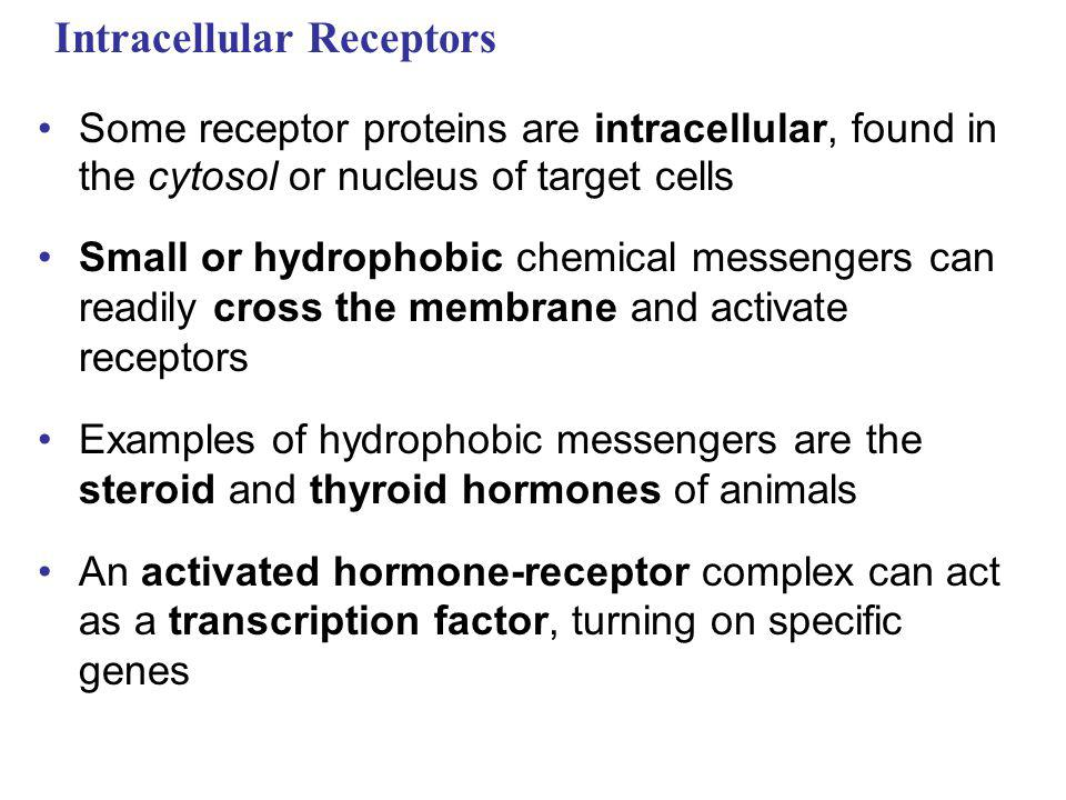 Intracellular Receptors Some receptor proteins are intracellular, found in the cytosol or nucleus of target cells Small or hydrophobic chemical messen