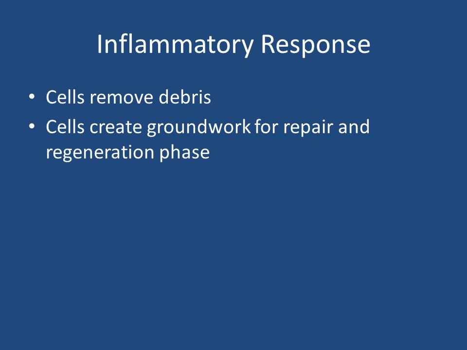 Delayed / Non Union Fx's Susceptible areas – Tibia – Ulna – Femoral neck – Scaphoid (most common)