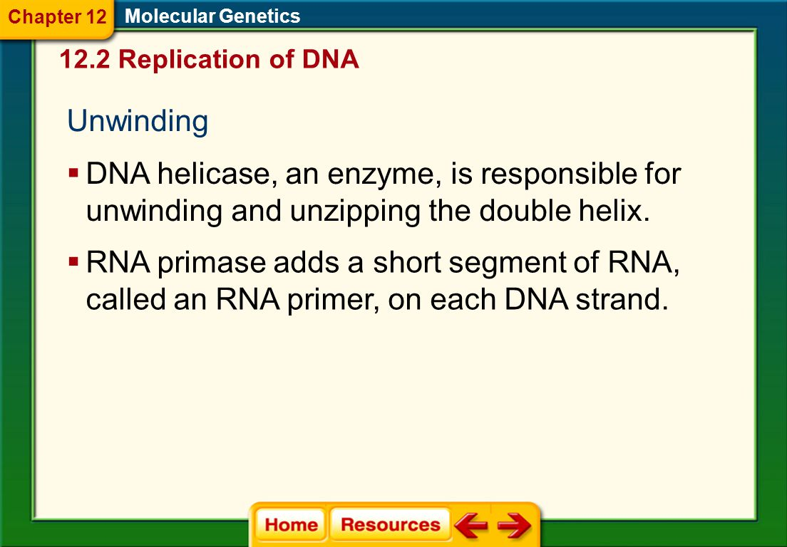 12.2 Replication of DNA Molecular Genetics Semiconservative Replication  Parental strands of DNA separate, serve as templates, and produce DNA molecu