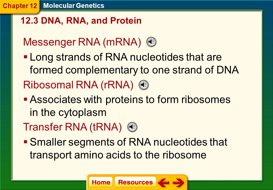 12.3 DNA, RNA, and Protein Molecular Genetics Central Dogma  RNA  Contains the sugar ribose and the base uracil  Usually is single stranded Chapter