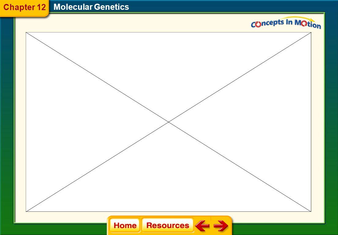 Molecular Genetics 12.4 Gene Regulation and Mutation Chapter 12
