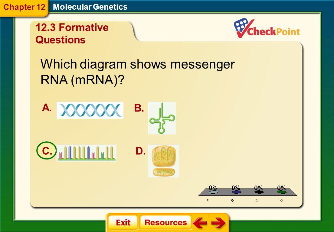 1.A 2.B 3.C 4.D FQ 7 Molecular Genetics Chapter 12 12.3 Formative Questions In the RNA molecule, uracil replaces _______. A. adenine B. cytosine C. pu