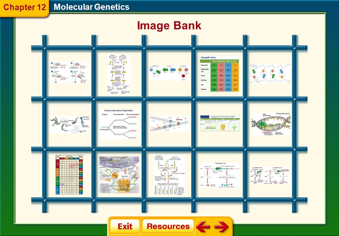 Molecular Genetics Glencoe Biology Transparencies Chapter 12