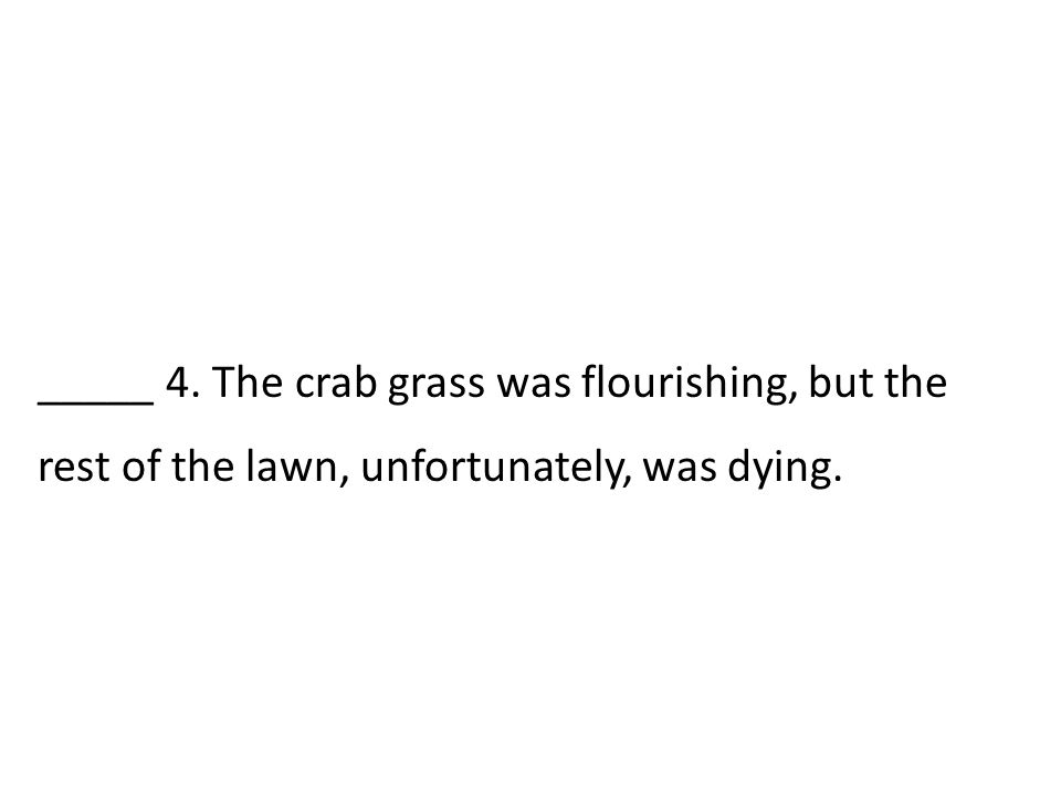 _____ 4. The crab grass was flourishing, but the rest of the lawn, unfortunately, was dying.